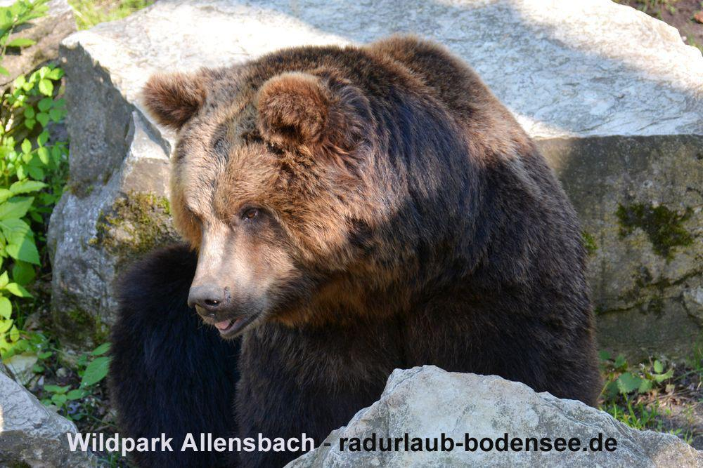 Cycling Lake Constance - Allensbach Wildlife Park